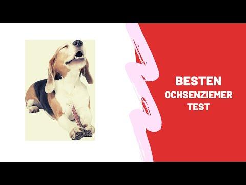 Die Besten Ochsenziemer Test 2021 - (Top 5)