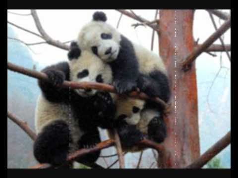 Killerpanda - Na periferii (pouze audio)