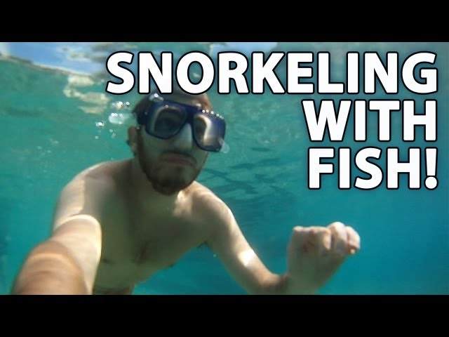 Snorkeling With Tropical Fish! -- Honeymoon (2 of 5)