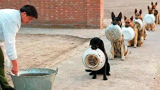 10 Best Trained & Disciplined Dogs in the World!
