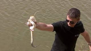 Рыбалка на река урал в казахстане