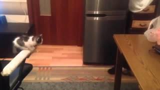 Смотреть онлайн Настойчивый котик никогда не сдается