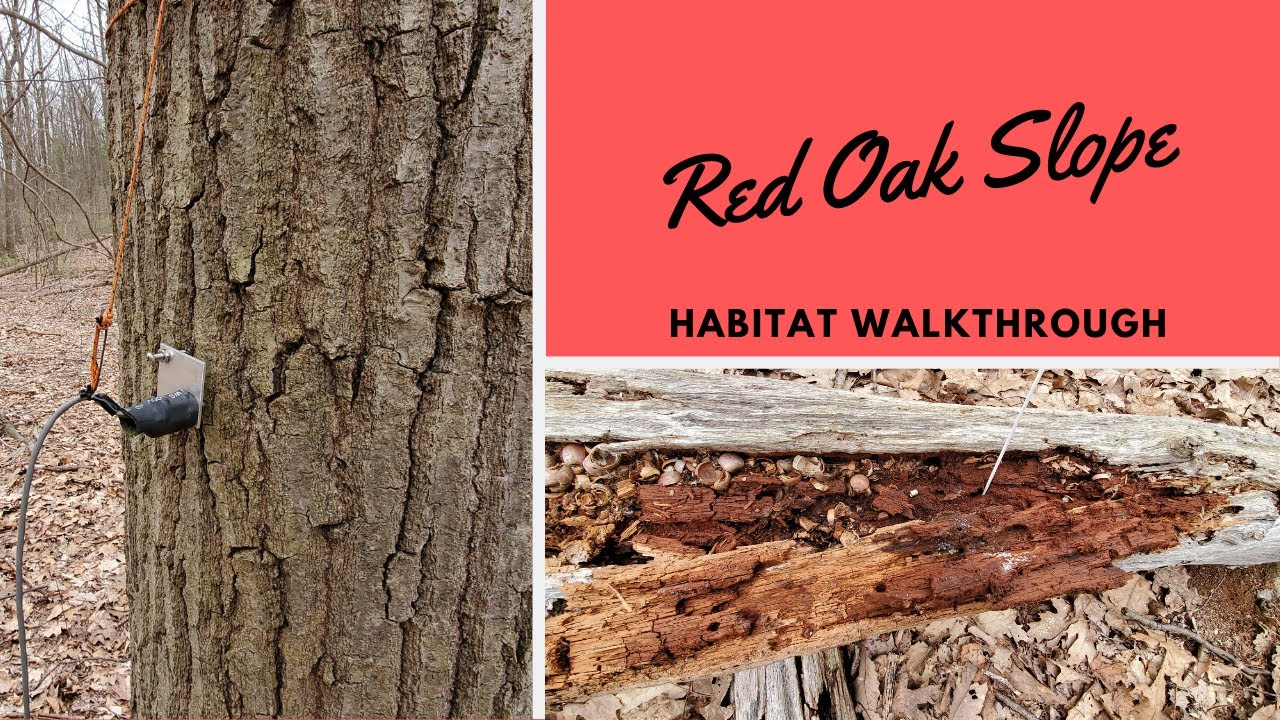 Habitats: Red Oak Slope
