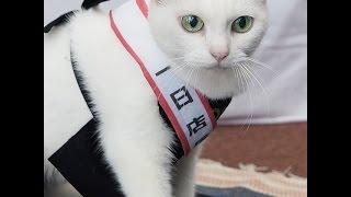 人気の美猫あなごちゃんが1日店長に!書泉ブックタワーで撮影会を開催