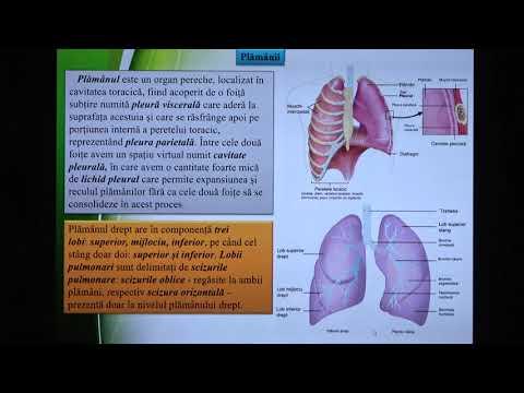 Inflamația articulației degetului mic al tratamentului piciorului