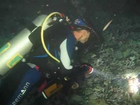Diving Akassia, Hausriff, Nachttauchgang
