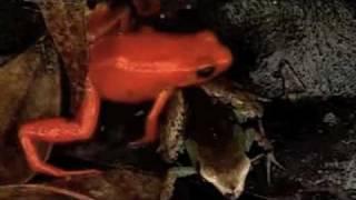 preview picture of video 'Biodiversité - Allain Bougrain-Dubourg'