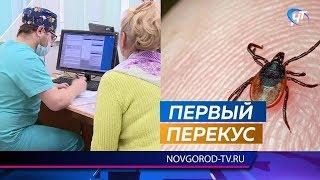 В Новгородской области растет количество пострадавших от укусов клещей