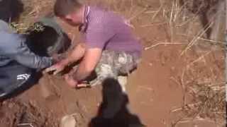 preview picture of video 'شاهد تفكيك الغام زرعها جنود النظام بعد هزيمتهم في مدينة طفس 29 أكتوبر، 2013'