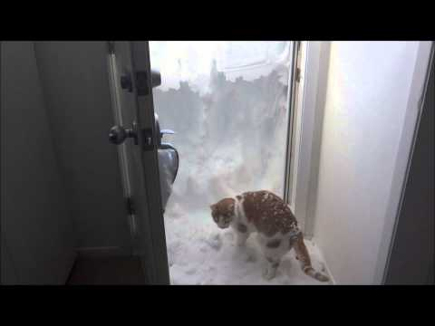 Anteprima Video Il gatto spalatore di neve. Intrappolato in casa da metri di neve non si lascia intimorire e alla fi
