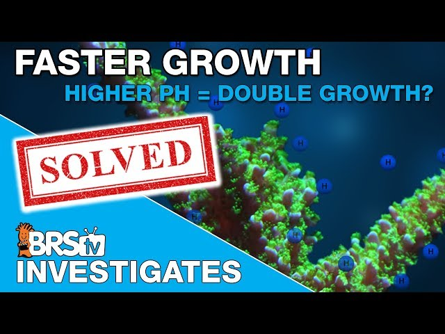 Can a higher reef tank pH double coral growth? | BRStv Investigates