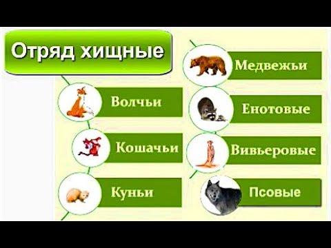 Зоология Семейство хищные