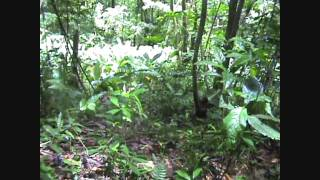 preview picture of video 'St Vincent and the Grenadines, Vermont nature trail, Summer 2009'