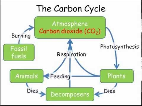 Gcse Biology Revision The Carbon Cycle Freesciencelessons Video