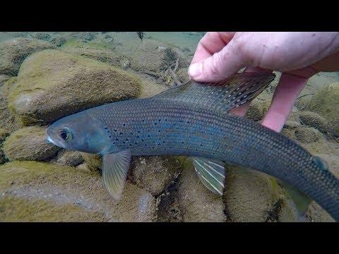 Fluefiskeri efter Stalling