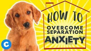 How to Help Your Puppy Overcome Separation Anxiety | Chewy