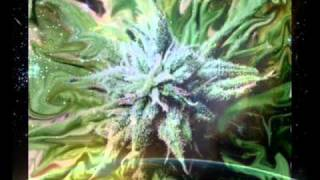 Choclair feat. Bishop Brigante - When I'm High (prod. Kardinal Offishall) 2002