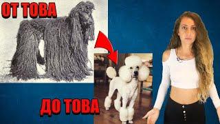 Как са изглеждали кучетата преди 150 години