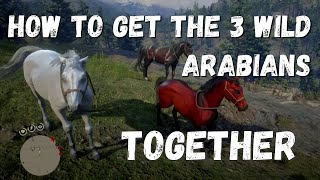 How to get the 3 Wild Arabian horses together. Red Dead Redemption 2.