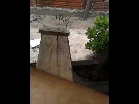 Manduri asilvai em caixa rustica