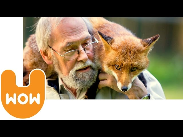 Strange Pets: Man & Fox