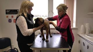 Join Sue as she takes Kane her Puppy to the Vets for the First Time