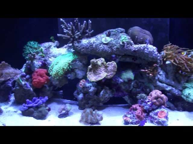 90g Reef Tank Closeup Tour - Best Furniture In The House Guaranteed!