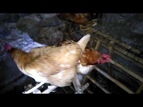 Lanalisi un calla su uova di vermi lelementare