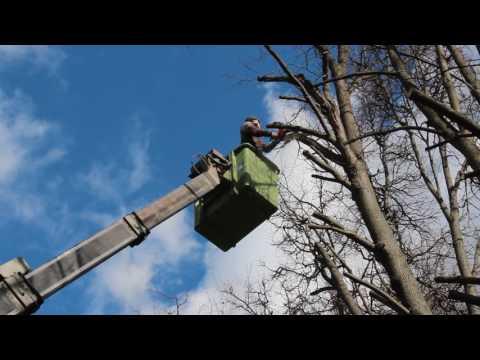 Кронирование деревьев с автовышки. Dendroplan.ru: 8(925)522-01-44