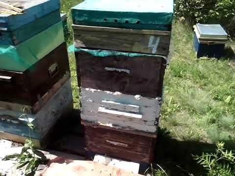 Пчелоудалитель, продолжаем отбирать мёд 13 августа 2019