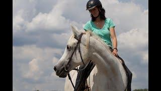 Guckige Pferde sind ein Geschenk für den Reiter
