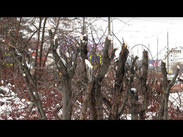 На улице Космонавтов вырезали яблоневый сад