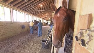 Shoe-changing champions at Belmont Park