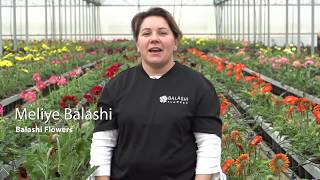 Balashi Flowers