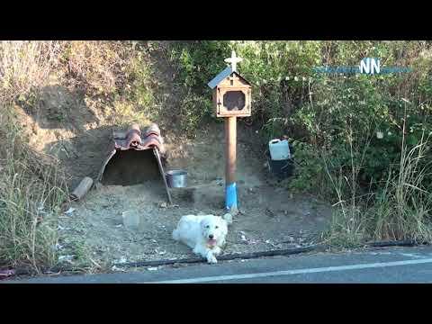 'Greek Hachiko'-Ναυπακτία: Ο σκύλος βρήκε στέγη δίπλα στο εικόνισμα  για το  αφεντικό του.Βίντεο