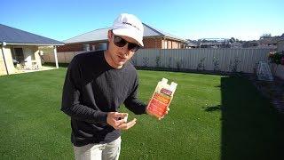Organic Weed Killer Test // Roundup Alternative