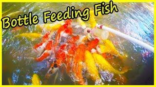 Fish Feeding in Yanoda Rainforest. Jokes with Fish. China Travel Vlog 2020