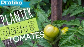 Comment planter ses pieds de tomates ?
