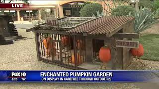Carefree Enchanted Pumpkin Garden