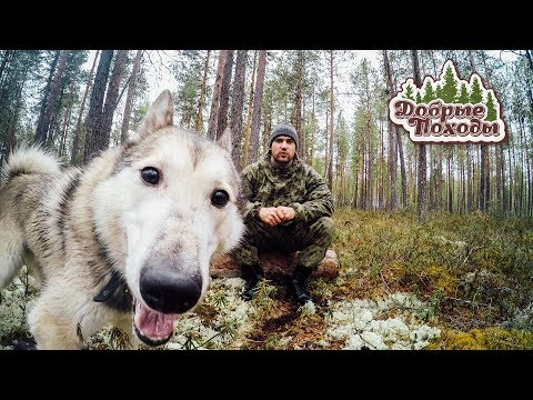 Дневной поход в лес. Тест мембранных носков DexShell.