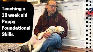 Teaching a 10 week old Puppy Foundational Skills