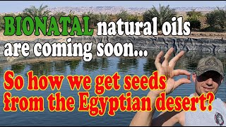 How we grow the seeds in the desert