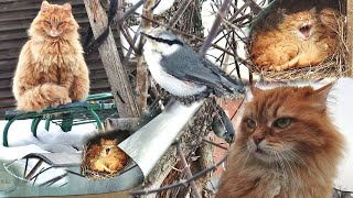 #Koshlandia #cats Винни + Пух, Winnie + Pooh Ириска, СОЛНЫШКО и ПОПОЛЗЕНЬ