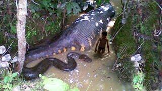 world largest anaconda