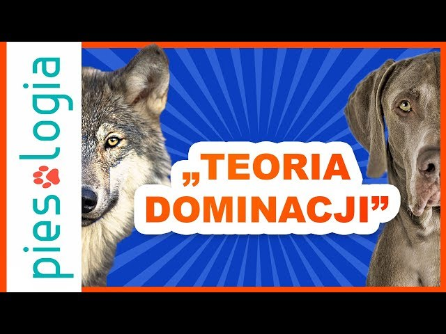 Video de pronunciación de dominować en Polaco
