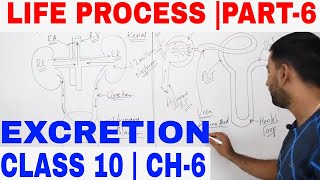 LIFE PROCESS- EXCRETION -PART 6