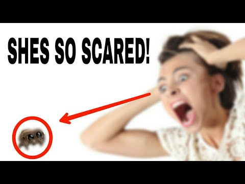 Mom REACTING to LUCAS THE SPIDER