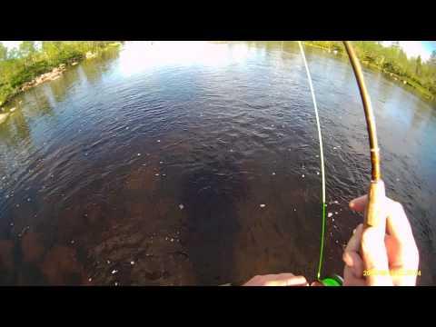 Video che in linea pesca su Yenisei