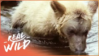 Grizzly Bear Cubs Fishing For The First Time | Real Wild