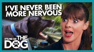 Terrifying Car Journey with Angry Great Danes |  It's Me or The Dog
